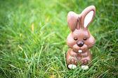 Lapin en chocolat assis dans l'herbe — Photo