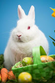 White rabbit sitting behind easter eggs in green basket — Stock Photo