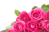Close up of a beautiful bouquet of pink roses on a white backgro — Stock Photo