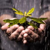 Vicino delle mani tenendo la piantina sotto la pioggia — Foto Stock
