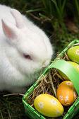 Conejo blanco sentado al lado de los huevos de pascua en cesta verde — Foto de Stock