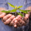 Hands holding seedling in the rain - Stock Photo