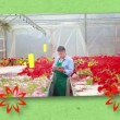 Montage of florists at work — Stock Video