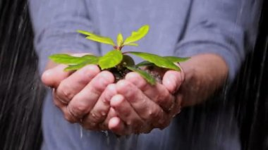 Hands holding seedling in the rain — Stock video
