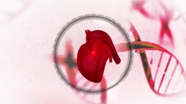 Montage of doctors with heart diagram on background — Stock Video
