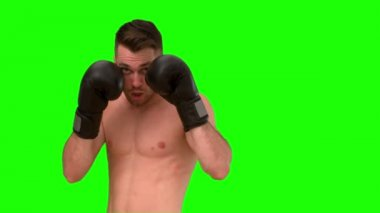 Brunette man parcticing boxing on green background — Stock video