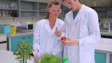 Students injecting liquid in a tomato — Stock Video