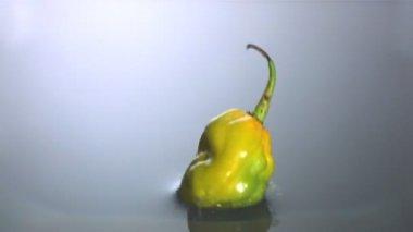 Habanero chili falling in water — Stock Video