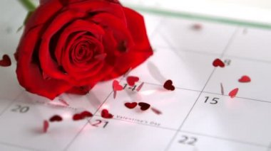 Confetti falling on red rose and calander showing Valentines day — Stock Video