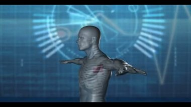 Medical video of revolving human figure — Stock Video