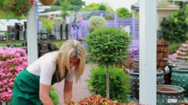 Woman working at the garden center — Video Stock