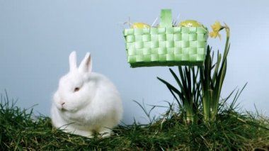 Basket of easter eggs falling next to a fluffy bunny over grass and daffodils — Stock Video