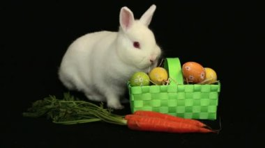 White bunny rabbit sniffing around a carrot and basket of easter eggs — Stock Video