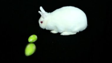 Fluffy white rabbit with easter eggs rolling towards him — Stock Video