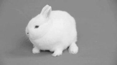 Fluffy white bunny — Stock Video