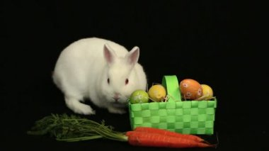 White bunny rabbit sniffing around a basket of easter eggs and a carrot — Stock Video