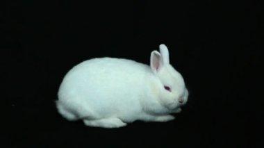 Fluffy white rabbit — Stock Video
