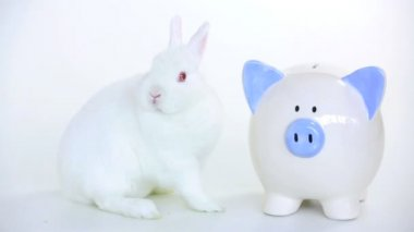 White rabbit beside a piggy bank and someone puts cash in — Stock Video