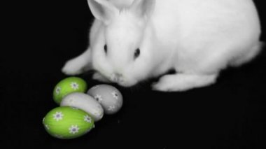 Fluffy white rabbit beside easter eggs — Stock Video