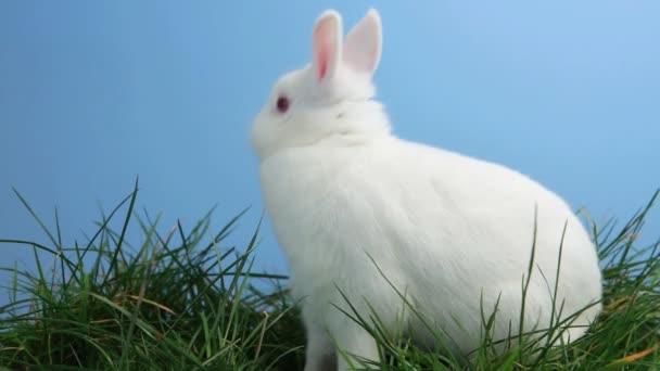 bunny rabbit sniffing around - photo #15