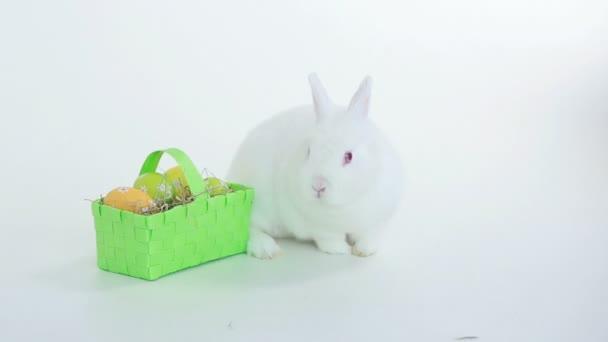 bunny rabbit sniffing around - photo #20