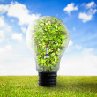 Foto Stock: Light bulb with plant inside