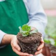 Garden center worker holding out plant — Stock Photo
