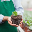 Garden center worker holding plant out of its pot — Stock Photo