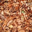 Stock Photo: Dead leaves
