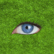 Blue eye over grass — Stock Photo