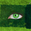 Stock Photo: Paint roller revealing green eye