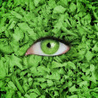 Green eye in the middle of leaves — Stock Photo