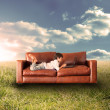 Child using laptop on couch in field — Stock Photo