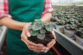 Garden center worker holding plant about to tbe potted — Stock Photo