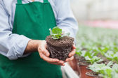 Garden center worker holding plant out of its pot — Stockfoto