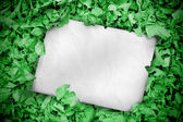 White poster buried into green leaves — Stock Photo