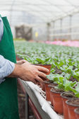 Garden center worker putting potted plant down — Stock Photo