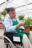 Man in wheelchair touching and admiring potted plant — Stock Photo