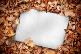 White poster buried into dead leaves — Stock Photo