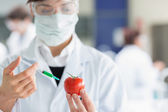 Student injecting tomato in the laboratory — Stock Photo