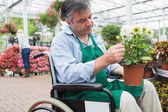 Garden center worker in wheelchair holding potted plant — Stock Photo