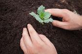 Ktoś jest sadzenie krzewów — Zdjęcie stockowe