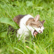 Angry cat in green grass — Stock Photo