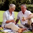 Stock Video: Elderly couple drinking white wine at picnic