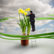 Businessman on ladder touching giant daffodils — Stock Photo #29454901