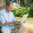 Cheerful mature man sitting on tree trunk using laptop — Stock Photo #29455389