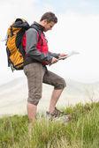 Excursionista guapo con mochila caminar cuesta arriba leer un mapa — Foto de Stock