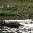 Stock Video: River flowing over rocks