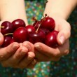 Close up on womans hands holding cherries — Stock Video