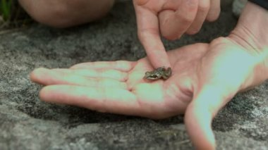 Tiny frog jumping off a hand — Stock Video